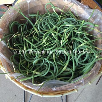 Basket of Garlic Scapes ⎮ © Life Through the Kitchen Window
