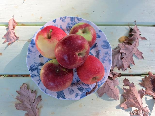Apples   © Urban Cottage Life.com
