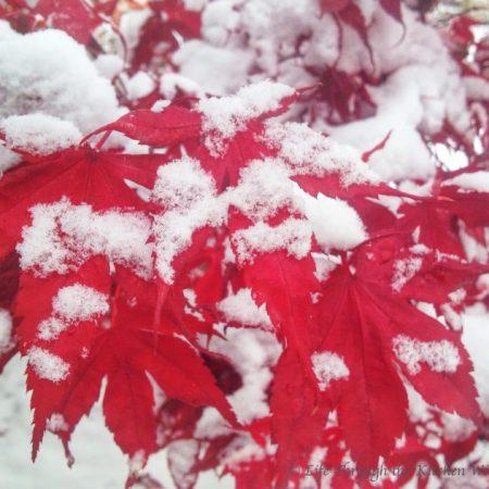 Winter Beauty at My Doorstep | © Life Through the Kitchen Window.com