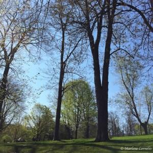 The Greening - May 7, 2015 | © Marlene Cornelis