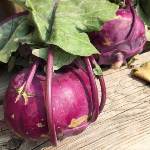 Purple Kohlrabi   © Marlene Cornelis