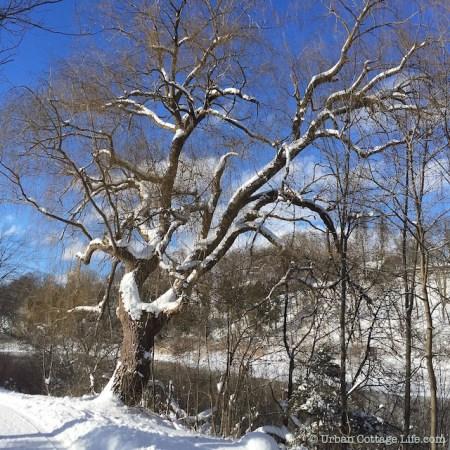 Winter Walk |© Urban Cottage Life.com