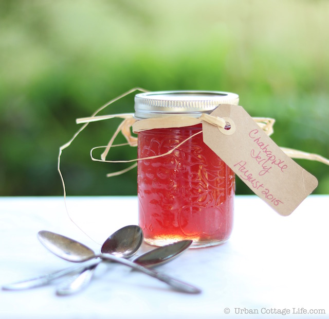 Crabapple Jelly |© UrbanCottageLife.com
