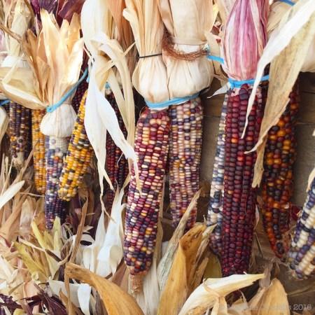 Flint Corn, Autumn 2016 | © Marlene Cornelis 2016