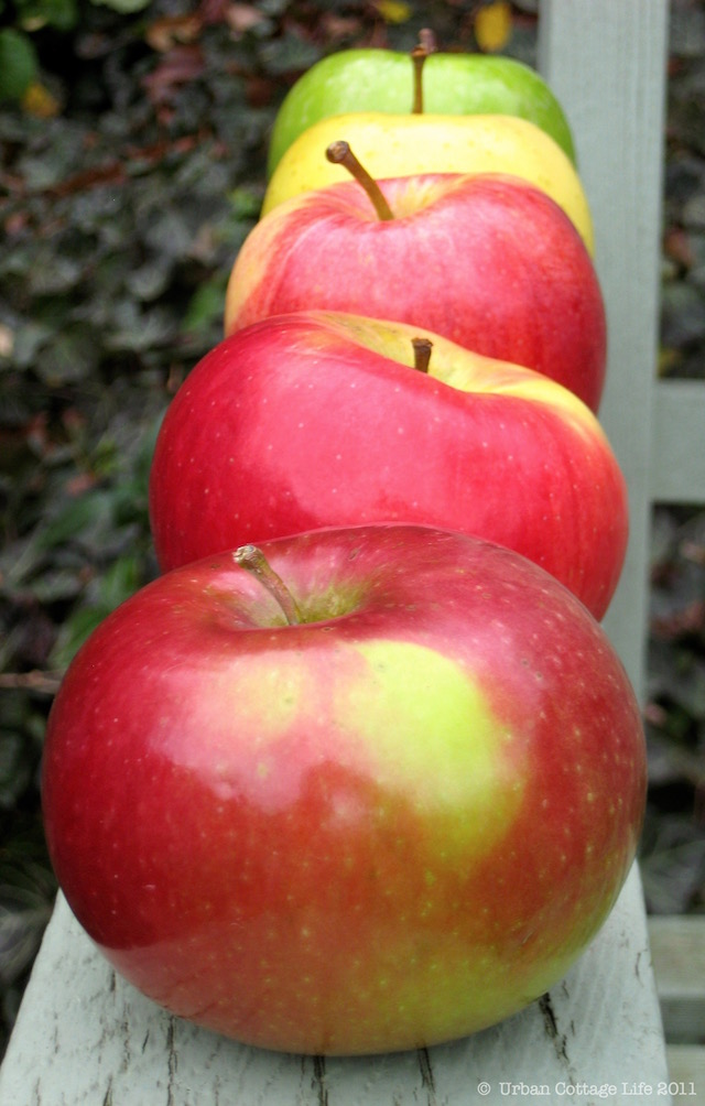 Apples | © UrbanCottageLife.com 2011