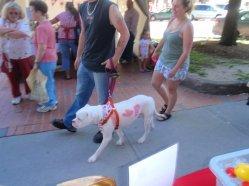 Canada Day dog passing by (Saint John, NB - 2010)