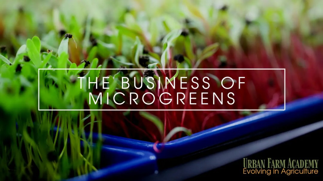 the business of microgreens