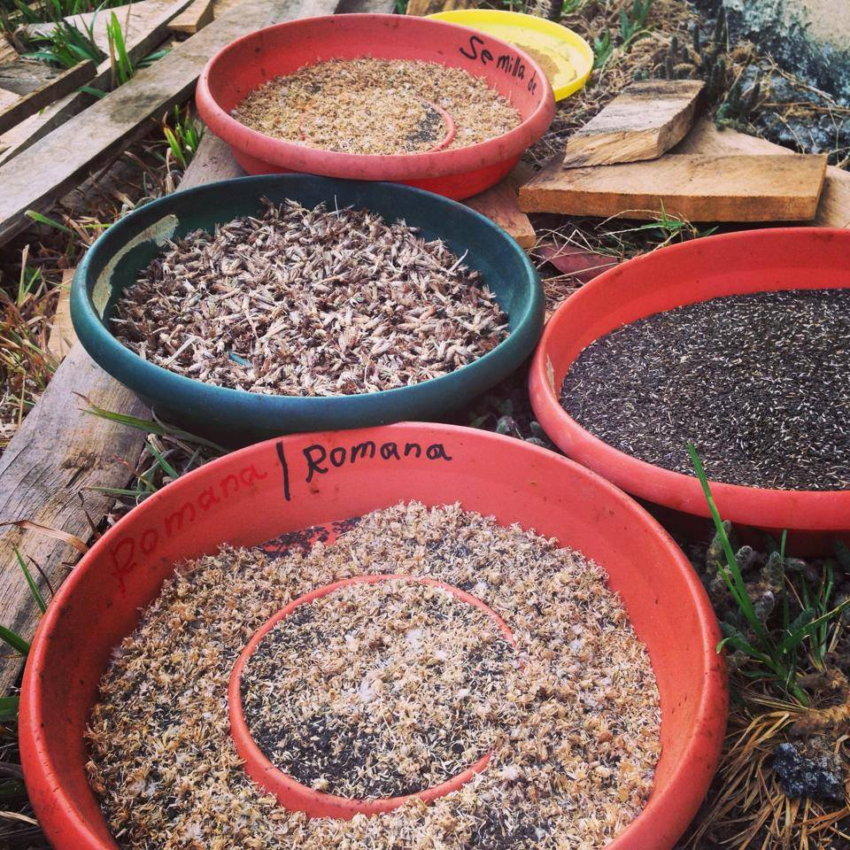 seed-production