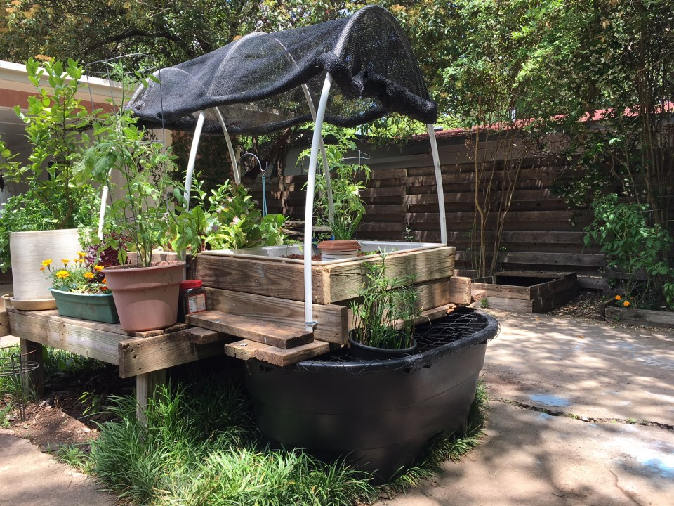 Backyard Aquaponics Garden Austin