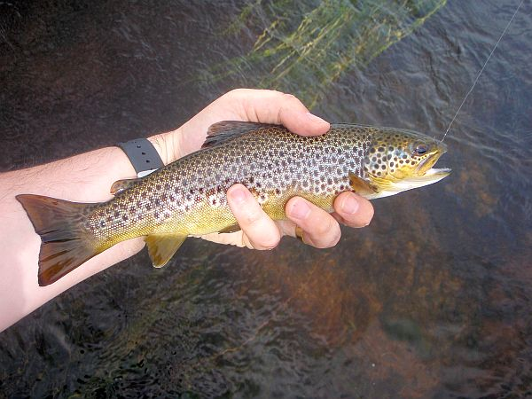 Lovely Trout