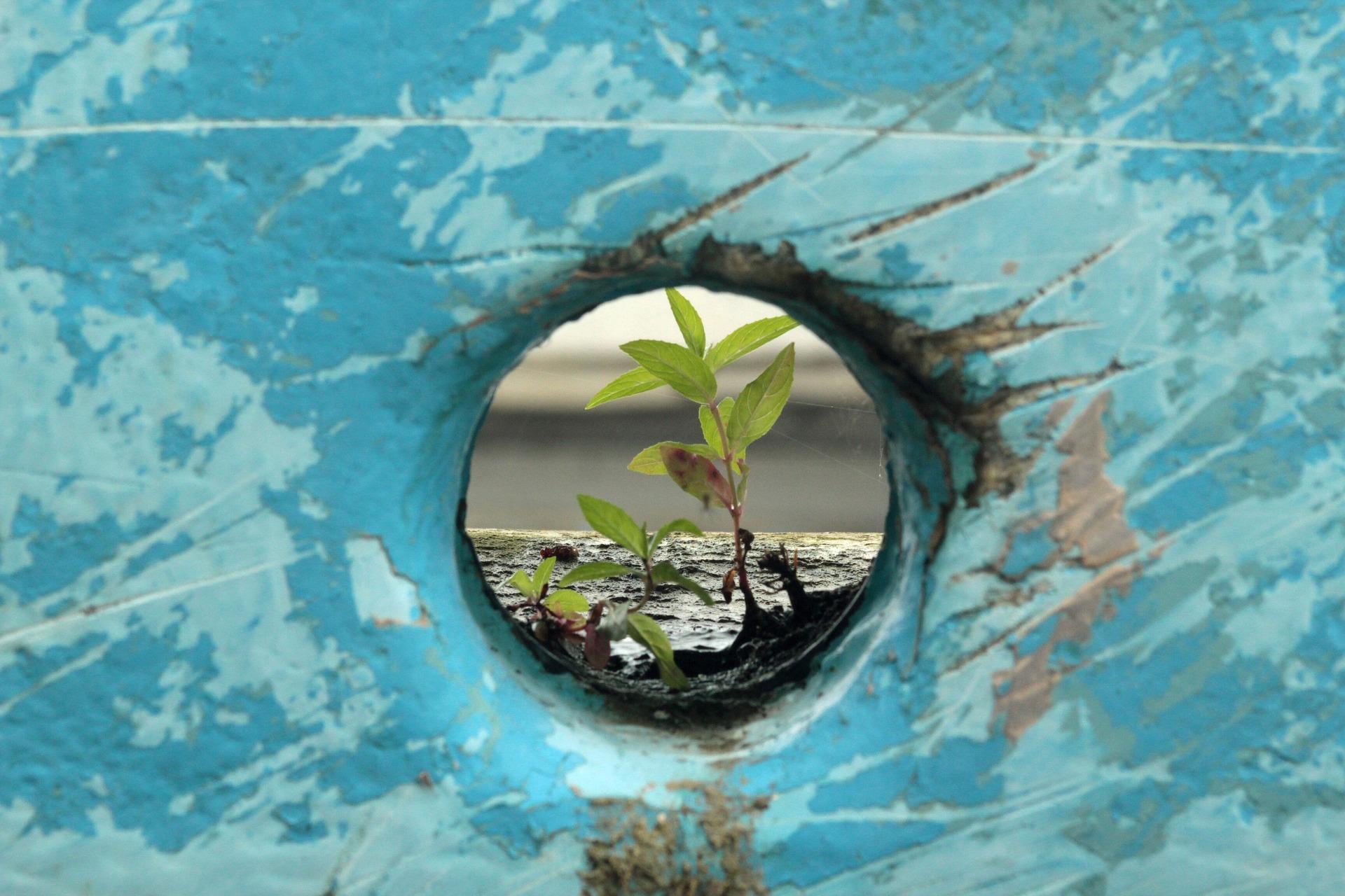 Urban food resilience