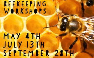 Beekeeping 101 – Hive Maintenance