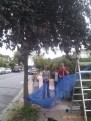 Jul N10: Big street plum harvest