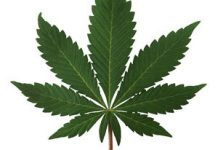 Cannibis: Phytocannabinoids in the treatment of cancer