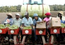 Over A Billion Dollars in Payouts For Black Farmers From Federal Lawsuit Settlement