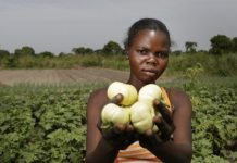 The United States Injects A $30 Billion Stimulation for the Small-Scale Farmers of Africa