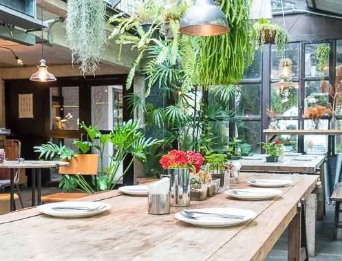 Plantas de interior Urban Jungle em restaurante