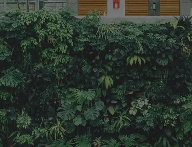 Jardins verticais Urban Jungle