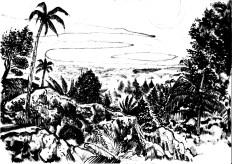 from tòke journey in Jamaica
