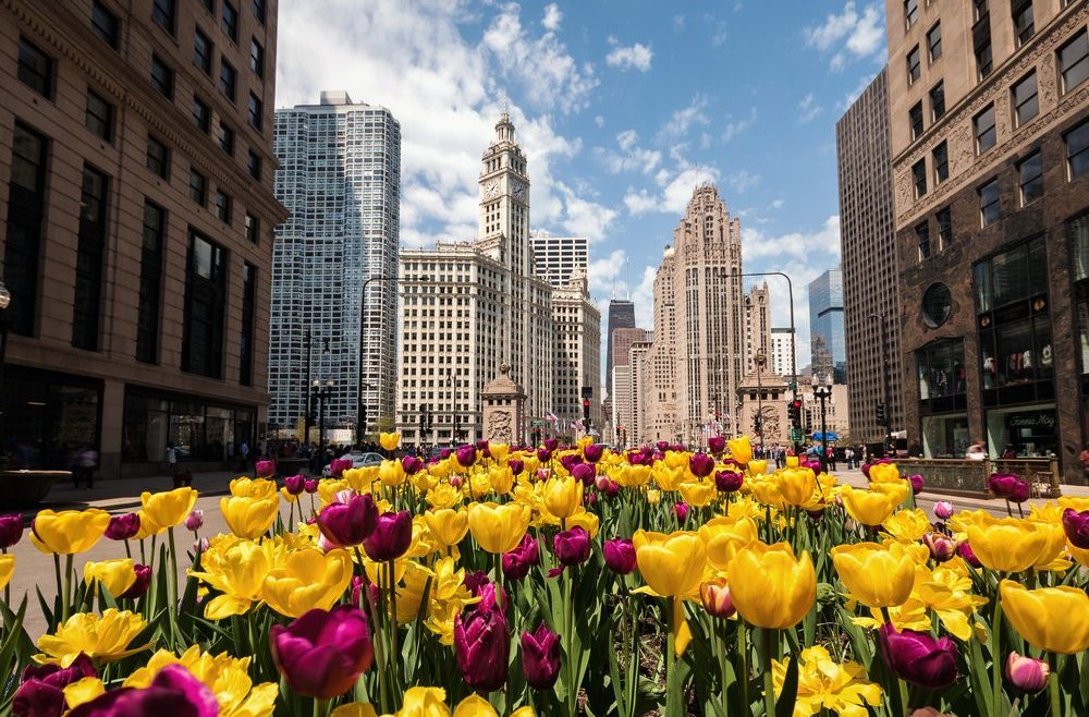 things to do in chicago this spring