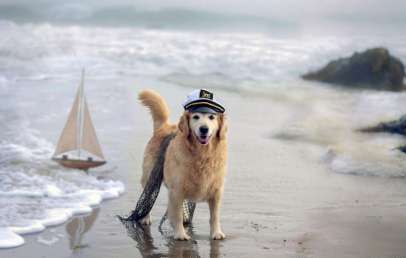 6 Best Dog Beaches in Chicago, Illinois