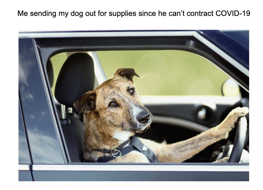 These Dog Memes Explain Exactly How We Feel About Quarantine