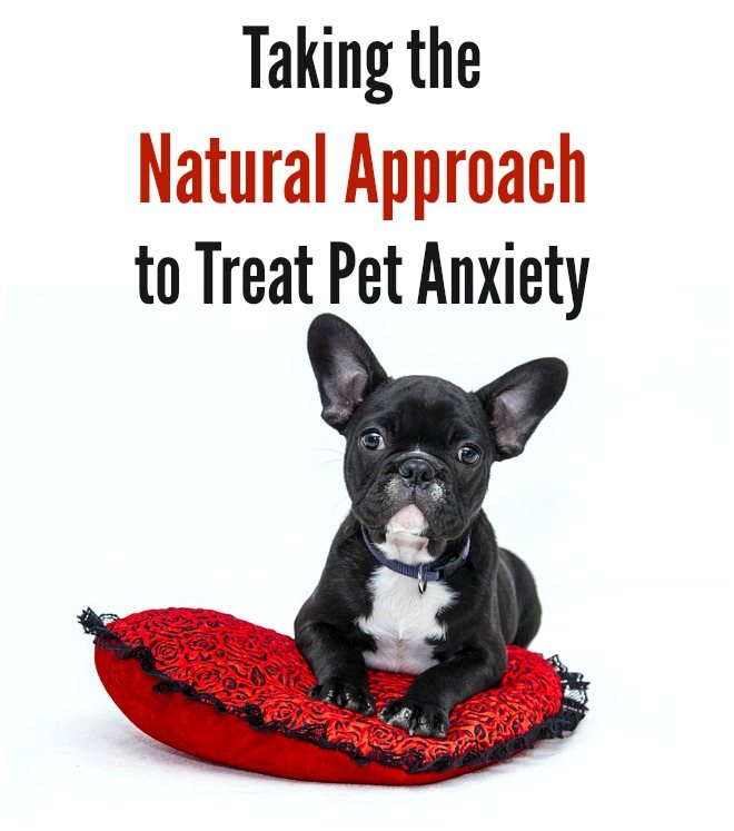 Taking the Natural Approach to Treat Pet Anxiety by Urban Naturale