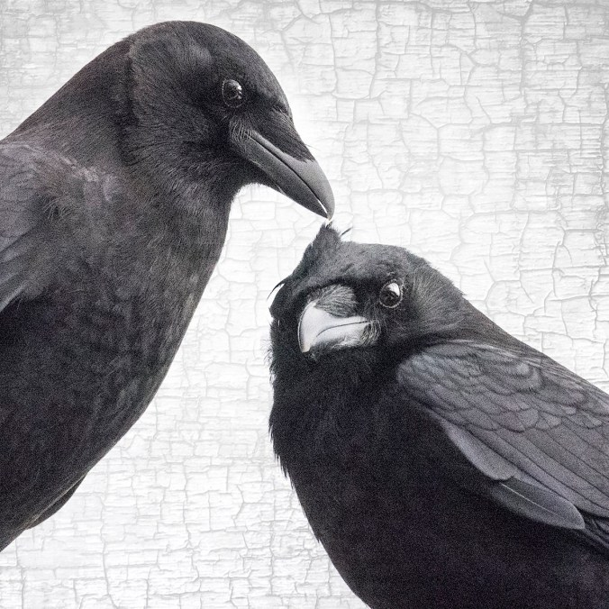 Style Crows