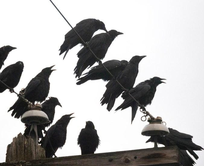 Crow Choir