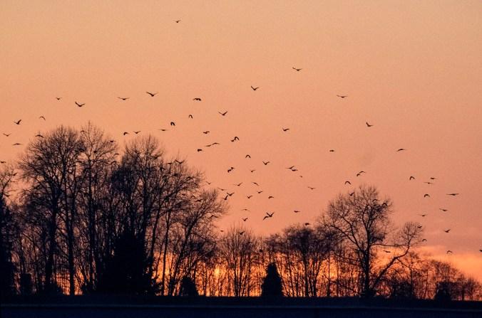 Still Creek Roost sunset