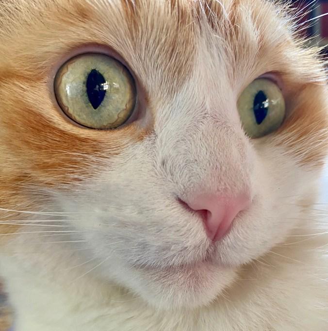 edgar wide eyes