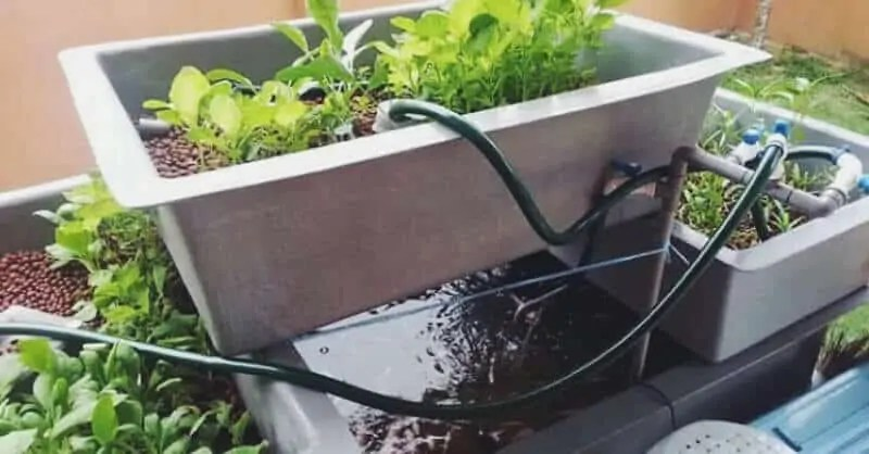 How To Build A Cheap DIY Backyard Aquaponics System