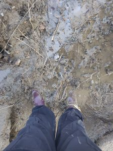 Ankle-deep mud on the shore of the Humber River in Toronto