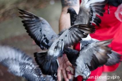 a lot of pigeons