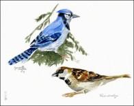 B Marinier Suzanne, etude-oiseaux