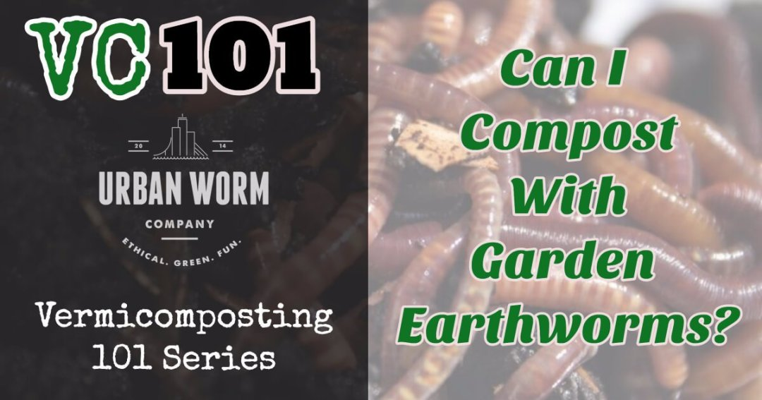 Vermicomposting 101: Can I Use The Worms I Find In My Garden To Vermicompost?