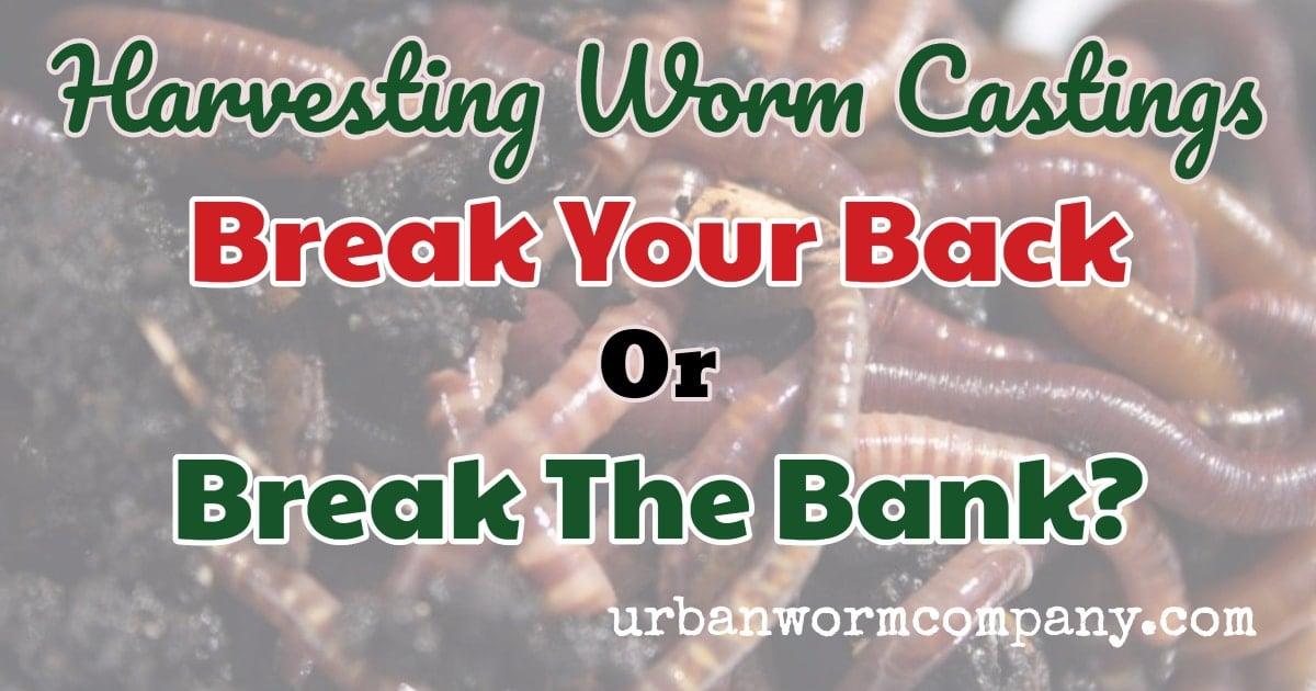 Harvesting Worm Castings: Break Your Back or Break The Bank?