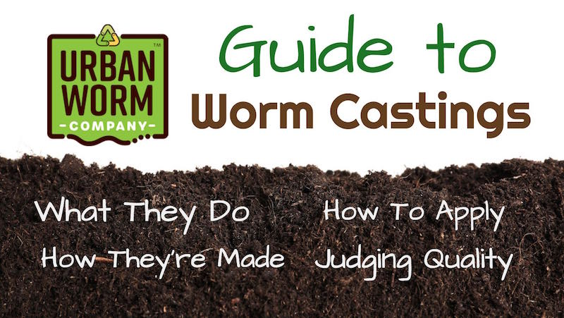 Worm Castings 101: Your Guide to Soil's Favorite Food