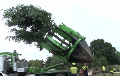 tree-relocation