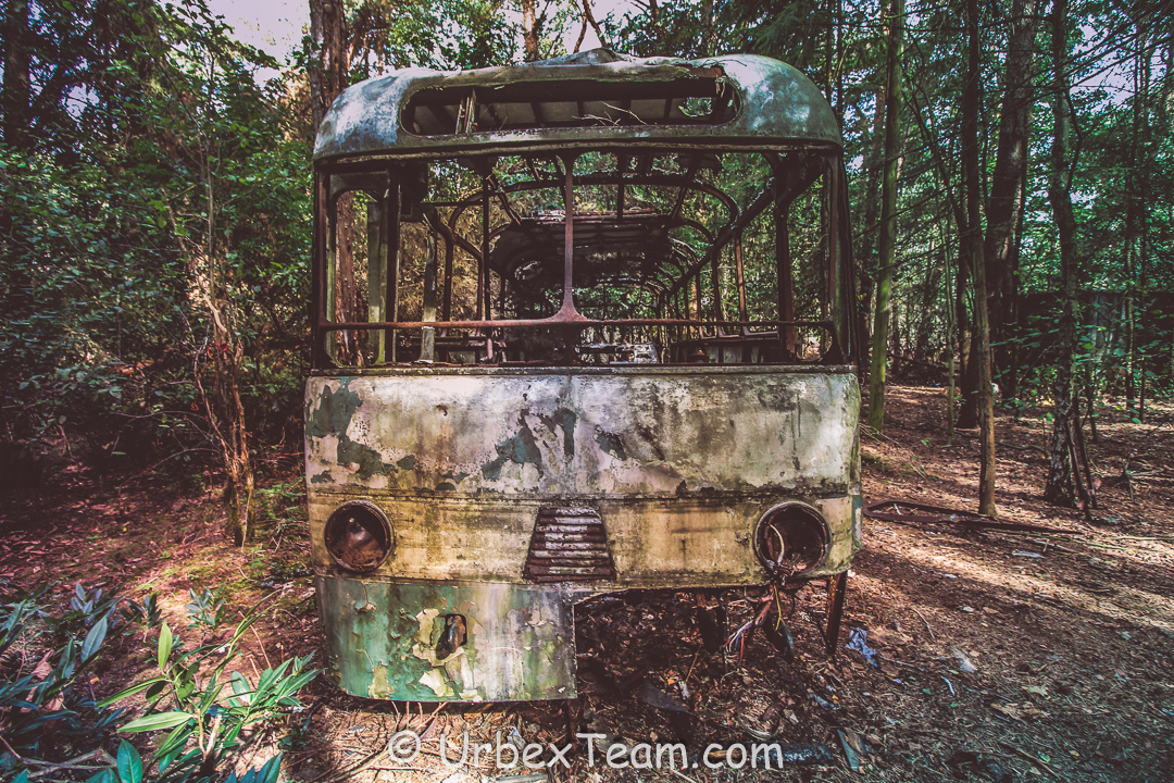 Jungle Bus 8