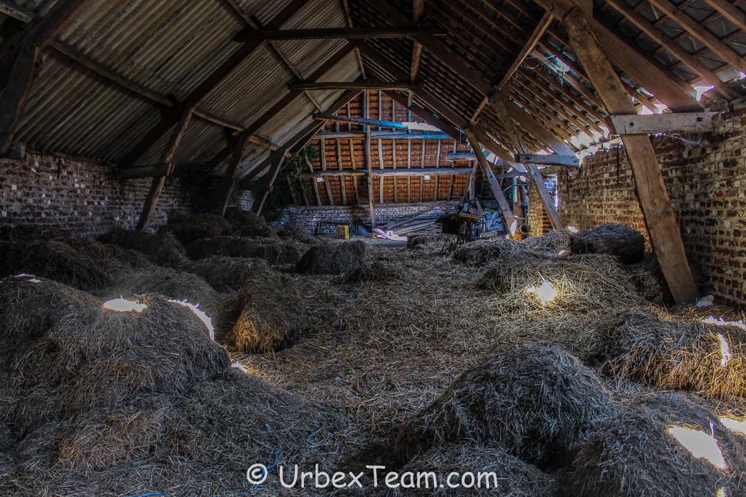 Tapioca Farm 3