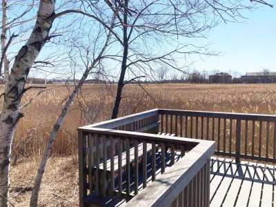 Belle Isle Marsh Reservation in East Boston birding