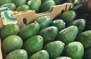 How to export avocados