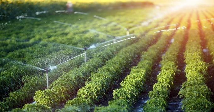 آبپاش زراعت کے لحاظ سے پاکستان دنیاکا چوتھا بڑاملک بن گیا، ماہرین زراعت