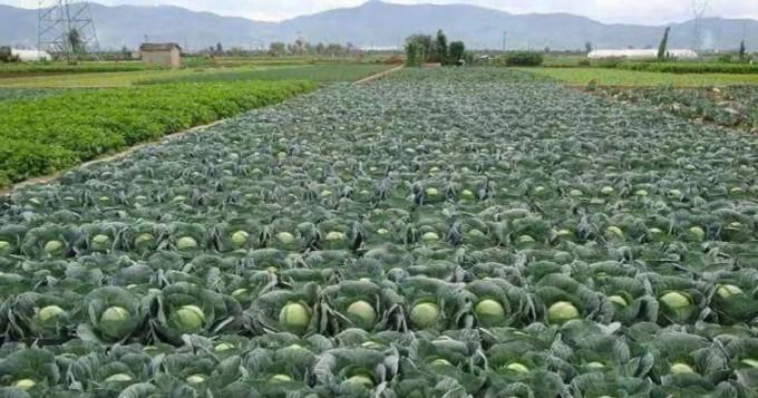 محکمہ زراعت کی کاشتکاروں کو سبزیاں اگانے کے جدید طریقوں سے استفادہ کی ہدایت