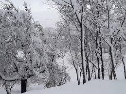 جاپان میں برفباری سے مرنے والوں کی تعداد 10 ہوئی