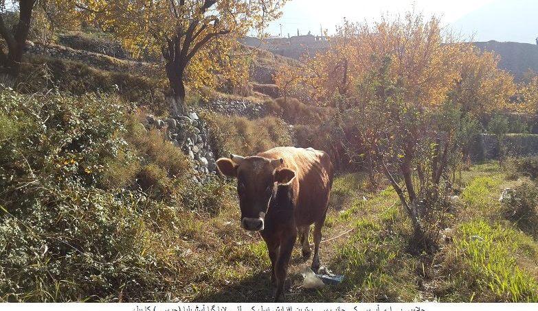 چلاس، پی اے آر سی کے زیر انتظام زرعی اجناس، میوہ جات اور جانوروں پر تحقیقات جاری