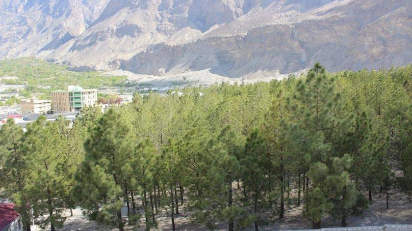 گلگت میں حکومتی سرپرستی میں ماحول دشمن تعمیری منصوبہ تیار، ۲۸۰۰ سے زائد درخت کاٹے جائیں گے