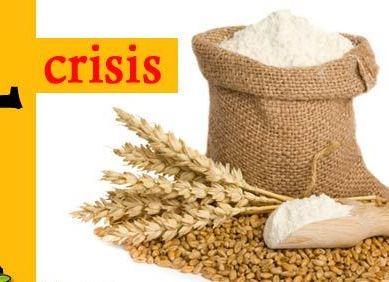 گلگت بلتستان کے کسی بھی ضلع میں گندم کی کمی نہیں، صوبائی وزیر خوراک محمد شفیق