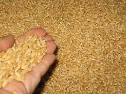 ضلع گانچھے میں ہر ماہ دو ہزار بوری گندم کی ضرورت ہے، لیکن صرف 1600 بوری فراہم کی جارہی ہے